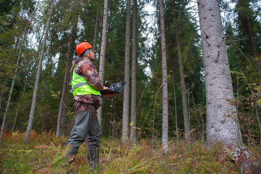 Evaluation forestière